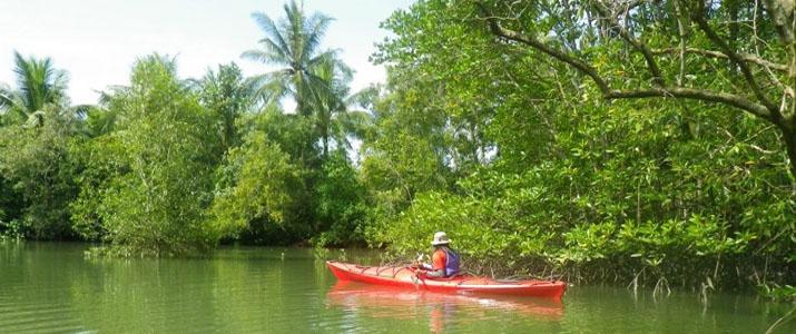 Osa Services 2 Alt kayak