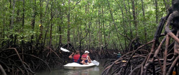 Osa Services 3 Alt kayak mangrove