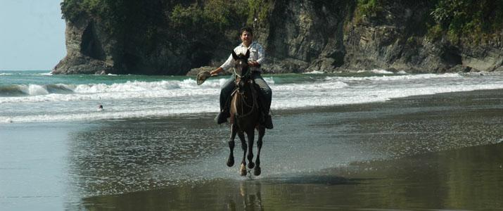 Alt 2 cheval