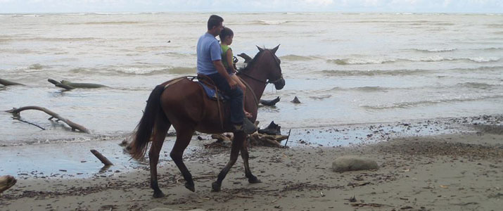 Alt 3 cheval