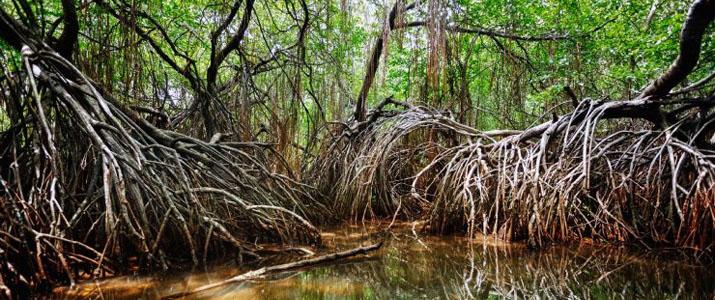 Perla del Sur 2 Alt mangrove