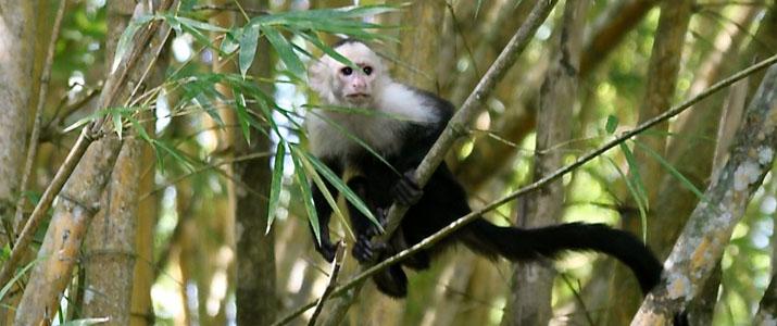 Perla del Sur 4 Alt singe