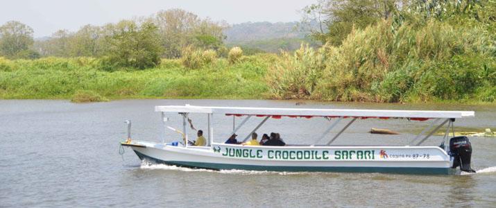 Jungle Crocodile Safari crocodile