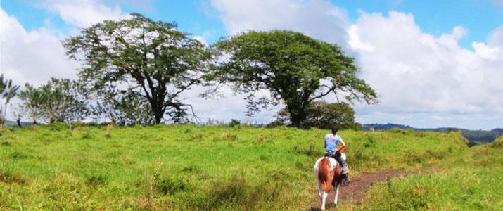 Hacienda Nosavar cheval