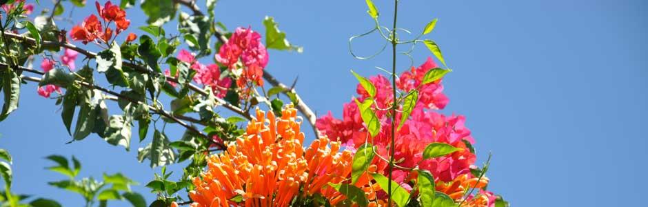 Nature Flore
