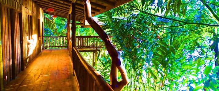 Pedacito de Cielo Boca Tapada Cabinas en Bois sur piloti Jungle Couloir Terrasse Verdure