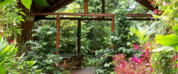 Arenal Oasis Ecolodge La Fortuna Volcan Jungle Luxuriante Jardin