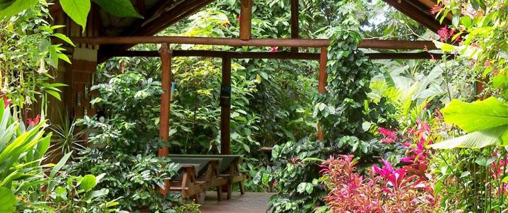 Arenal Oasis Ecolodge La Fortuna Volcan Jungle Luxuriante Jardin