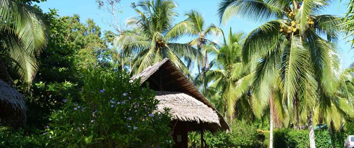 Coco loco lodge Caraïbes Sud Puerto viejo de Talamanca jardin