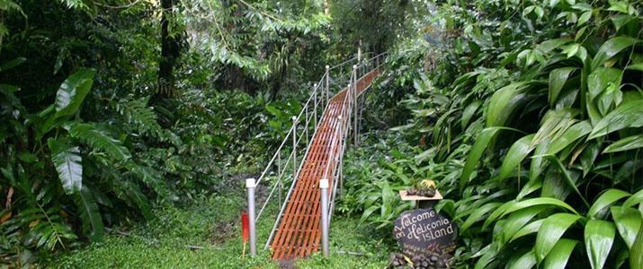 Heliconia Island Las Horquetas Braulio Carrillo Puerto Viejo de Sarapiqui Pont Suspendu Jardin Jungle