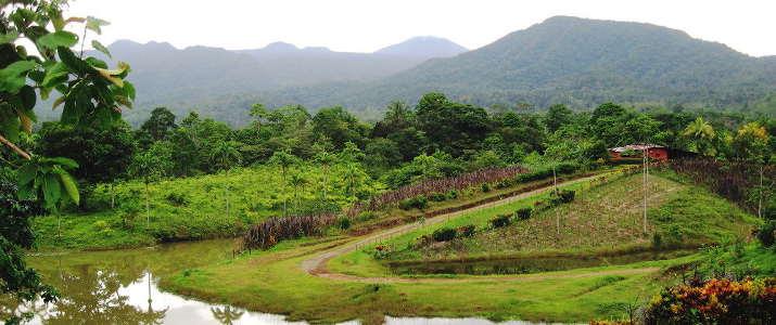 La Anita Rainforest Ranch Hotel Costa Rica Entrée
