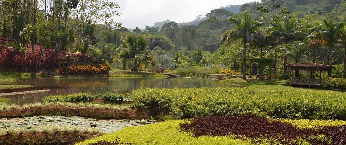 Macaw Lodge Tarcoles Hotel Costa Rica Chambre