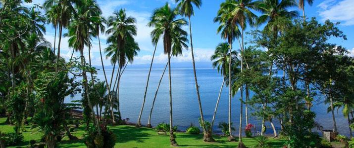 Playa Cativo Hotel Costa Rica Pacifique Sud Vue Palmier Mer