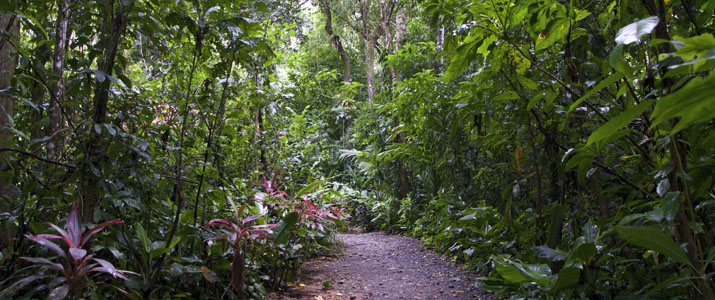 Playa Nicuesa Rainforest Lodge Hotel Pacifique Sud Costa Rica Nature Chemin