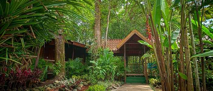 Pachira Lodge Tortuguero jardin bois nature