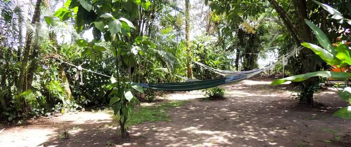 Aracari hamacs dans le jardin