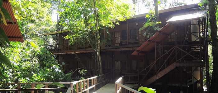 Hotel Rana Roja lodge bois nature luxuriante