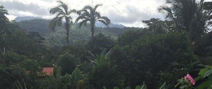 Hotel Cacao - Jardin tropical