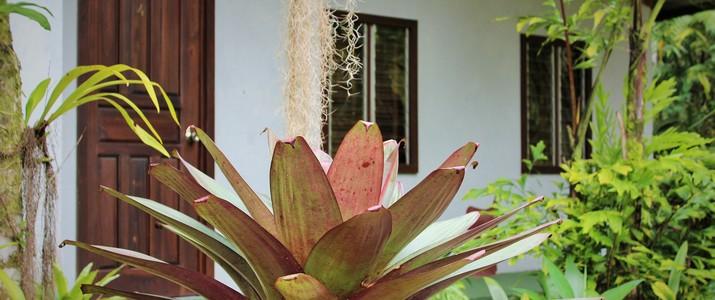 Talamanca Reserve hotel san isidro del general chirripo san gerardo de rivas jungle verdure