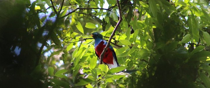 Talamanca Reserve san isidro del general san gerardo de rivas oiseau coloré bleu rouge jungle verdure
