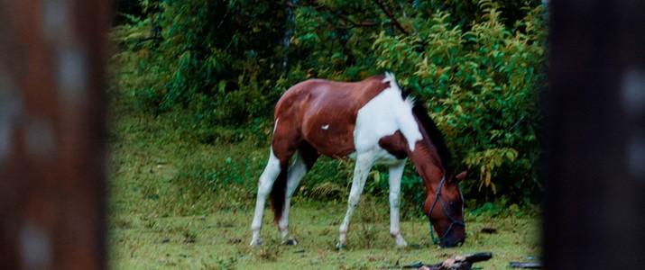 Hotel Rancho Cerro Azul La Fortuna cheval