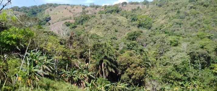 Rincon ecologico Terraba vue