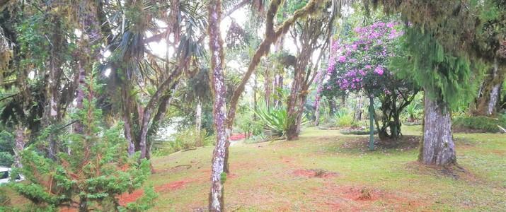 Station biologique las cruces jardin de wilson san vito jardin