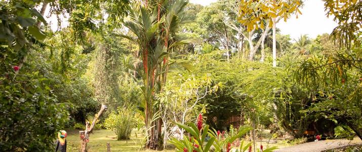 Bungalows Aché Cahuita Caraïbes Sud jardin