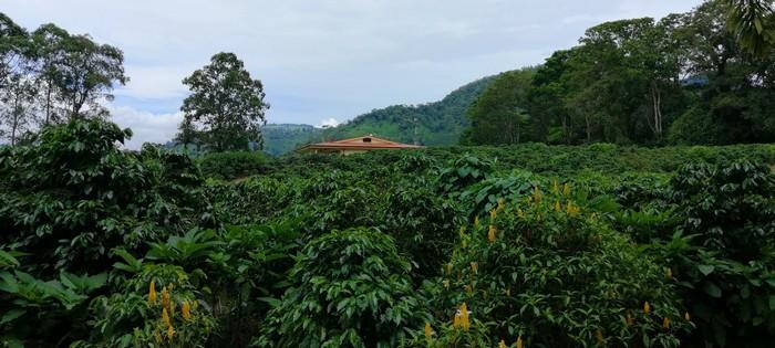 La Casona del Cafetal plantation de café Orosi Cachi