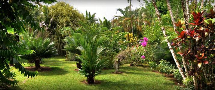 hôtel Magella Inn Caraïbes Sud Cahuita jardin tropical Fleurs