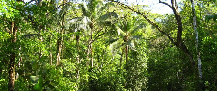 Rio Tico Safari Lodge Pacifique Sud Ojochal Costa Rica Hotel Nature
