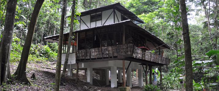 El arbol Caraïbes Sud Manzanillo maison dans les arbres en plein nature sécurisée luxe confortable