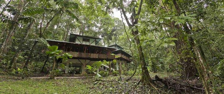 El arbol Caraïbes Sud Manzanillo maison dans les arbres en plein nature sécurisée luxe jardin tropical