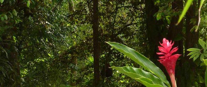 Star Moutain Jungle Lodge