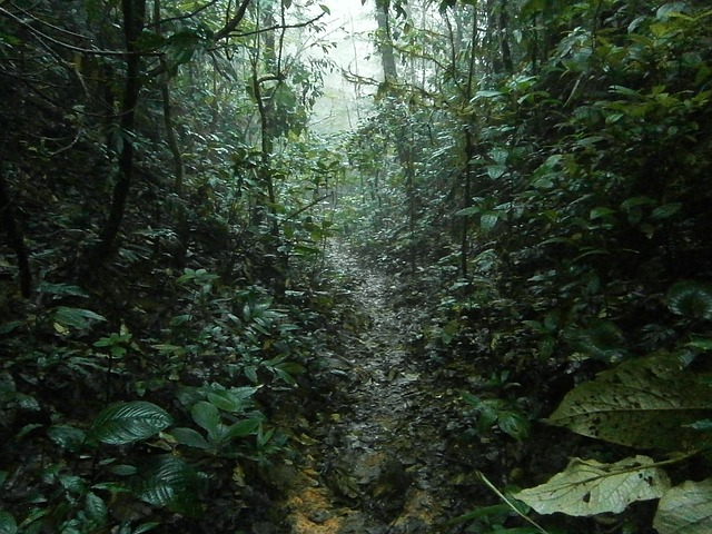 Costa Rica Saison Humide Pluie Tempête Tropicale Ouragan